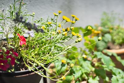 写真:植物 Photo by 山田 泰一