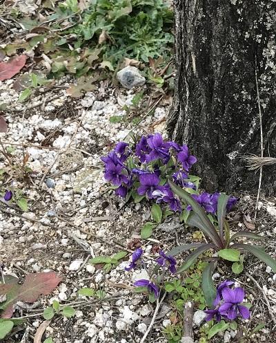写真 2017-04-05 13 14 30