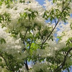 おすすめシンボルツリー