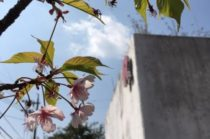春到来! 4月~5月『家づくり相談会』イベントを開催!