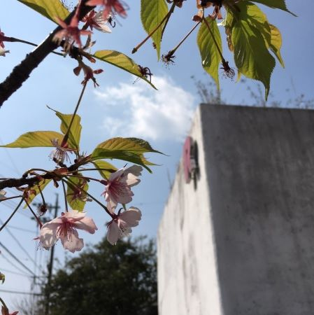 ラーバン 花 春 桜
